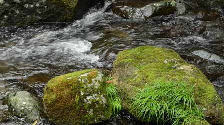 Narrow brook flowing in back of green mossy stomes