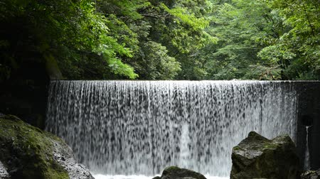 levee : Artificial waterfall from levee in front of green forest Stock Footage