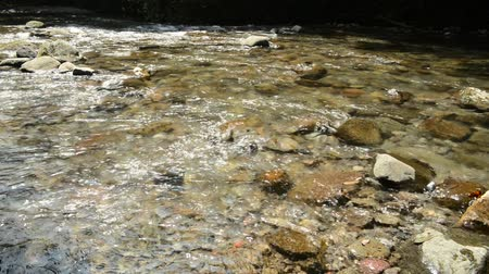 Shallow gentle clear brook flowing on many stones