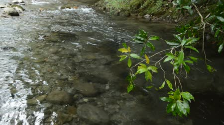 Shallow gentle brook over tree branches with green leaves
