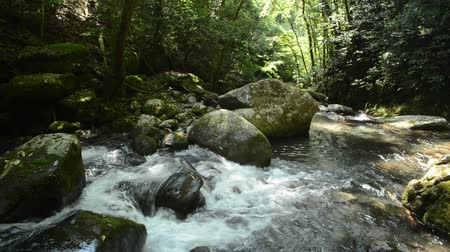Brook flows down between green native forest in the mountain
