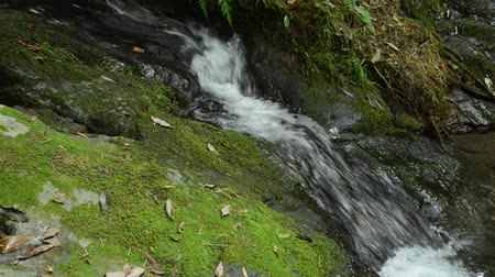 Narrow fast brook flowing on a bright green mossy rock slope