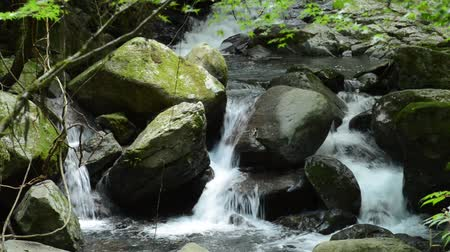 Narrow fast brook flowing among lot of stones Stock Footage
