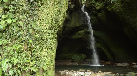 povodí : White narrow waterfall in back of green fern growth rock cliff Dostupné videozáznamy