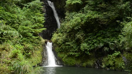 Two stage narrow white waterfall surrounded by bright green forest