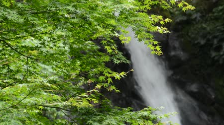 Bright green maple leaves in front of white waterfall