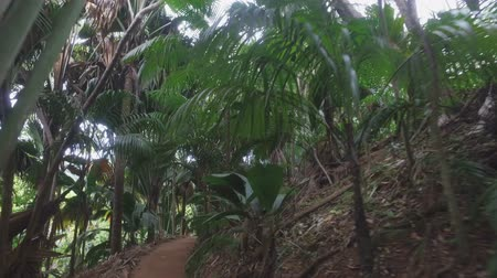 Walking Through National Park Vallee de Mai, Praslin Island, Seychelles 2