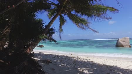 anse : Walking Towards Beach Through The Palm Trees, La Digue, Seychelles Stock Footage