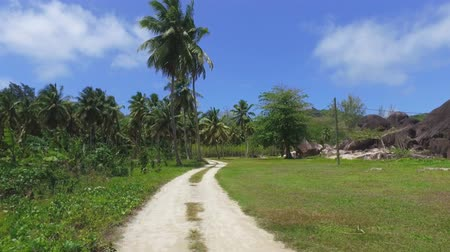 Walking Through Palm Trees On Exotic Island, La Digue, Seychelles 4