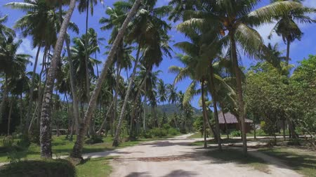 anse : Walking Through Palm Trees On Exotic Island, La Digue, Seychelles 2