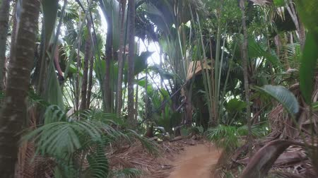 mahe : Walking Through Vallee de Mai Nature Reserve, Praslin Island, Seychelles 1