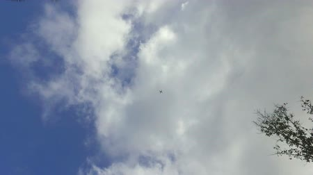 takamaka : Drone Flying Up From The Beach, Seychelles
