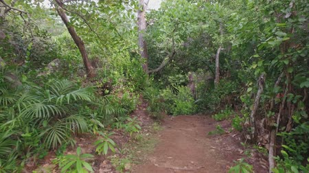 ルーツ : Walking Through The Forest, Mahe Island, Seychelles 2 動画素材