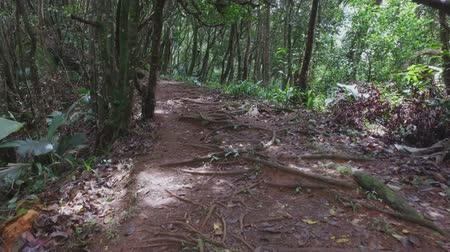mahe : Walking Through The Forest, Mahe Island, Seychelles Stock Footage