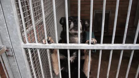 animal adoption : Dogs in the animal shelter, dogs in the enclosure for dogs