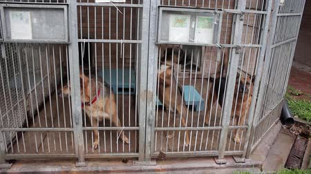 gaiola : Dogs in the animal shelter, dogs in the enclosure for dogs