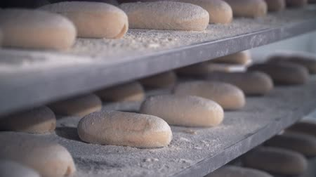 prepare food : bread production at the bakery, fresh baked bread