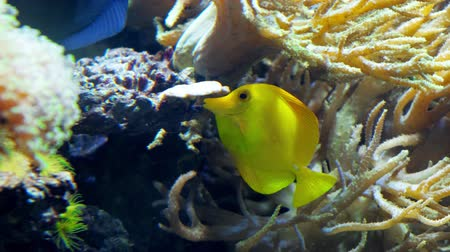 colorful fish swim in an aquarium eat corals and play