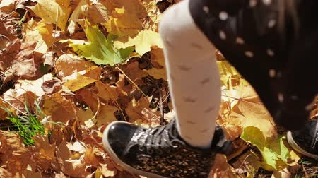 хрупкий : black shoe stepping on yellow leaves on sunny day in autumn park Стоковые видеозаписи