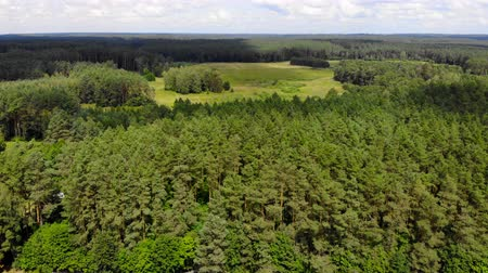 clareira : Aerial view green trees growing in forest around clearing on cloudy summer day in nature Vídeos