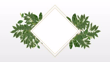 редактируемые : square photo frame for copy space with decorative plants against white background