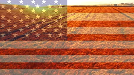harvesting : Animated american flag against crop field background