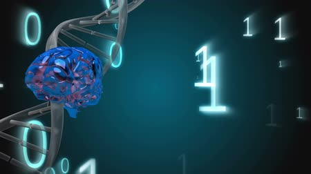 atomic model : Digital composite of spinning DNA helix and a brain surrounded by binary codes in free falling on blue background Stock Footage