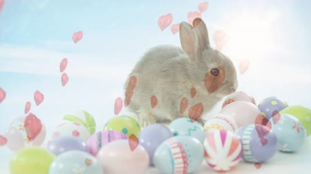 vasárnap : Digital composite of an easter bunny on top of easter eggs while hearts fly around Stock mozgókép