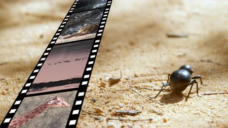 bird ecology : Digital composite of a bug walking on sand while a film strip shows different videos and pictures on nature and animals Stock Footage