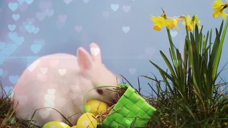 şekerleme : Digital composite view of a white easter bunny and basket with eggs while in the garden with yellow flowers. Hearts all around. Stok Video