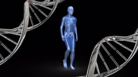 atomic model : Digitally generated human anatomy walking while DNA strands rotates in the side Stock Footage