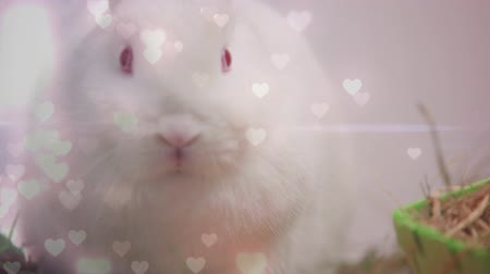 domingo : Digital composite of a white rabbit with floating pink hearts