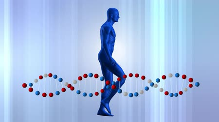 representação : Digitally generated human model walking with DNA double helix rotating