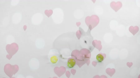 vasárnap : Digital composite of side view of easter bunny playing with easter eggs while hearts fly up