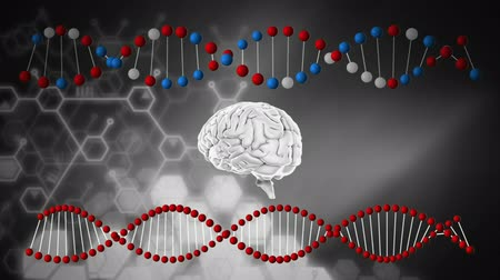 lobe : Digitally generated animation of a rotating brain in between DNA strands Stock Footage