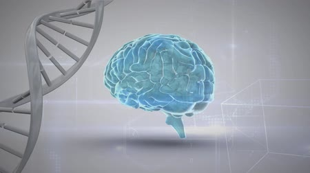 anatomický : Digital animation of rotating blue brain and white DNA strand on a gray background with random moving geometric shapes Dostupné videozáznamy