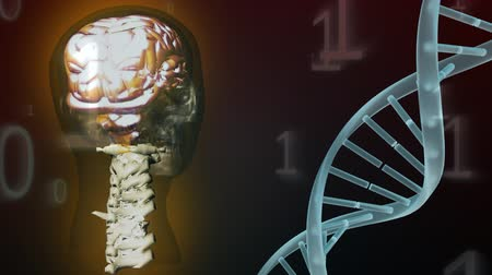 anatomický : Digital animation of a rotating 3d human face, with bronze brain and spinal column, and a white DNA strand on a black background with falling binary digits Dostupné videozáznamy