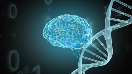 temporal : Digital animation of a rotating brain and a DNA helix. Binary codes are seen running in the foreground Stock Footage
