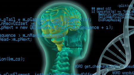 lobe : Digital animation of a human head beside a DNA helix. Program codes are running in the foreground
