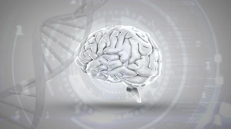 lobe : Digital animation of human brain beside DNA helix in a grey background. Numbers are seen moving forward Stock Footage