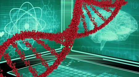 lobe : Digitally generated animation of DNA double helix rotating with background of digital brain and atomic structure Stock Footage