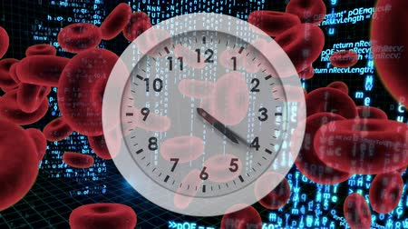 blood circulation : Digitally generated animation of white clock with red blood cells and program codes moving in the background