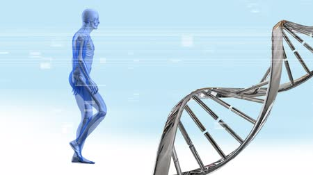 atomic model : Digital animation of a DNA double helix rotating and human anatomy walking with glitches