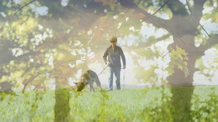 blindness : Digital composite of a Caucasian woman walking with a guide dog with a background of trees Stock Footage
