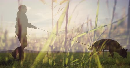 コンテンツ : Digital composite of a man walking his dog on grass land with tall grass in the foreground 4k