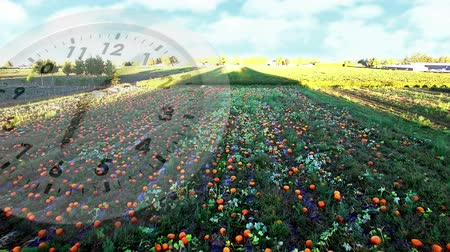 field study : Digital composite of a field with growing crops and a clock running in the foreground