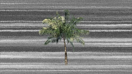 tek renkli : Digital animation of a palm tree in the middle of the screen with monochromatic static in the background