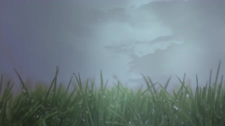 гром : Digital animation of wet grass on a stormy day under constant rain. Flashes of lightning is seen in the background