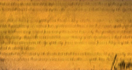 írott : Digital animation of written constitution of the United States moving in the screen 4k