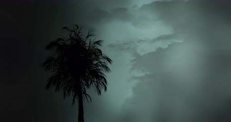 opvallend : Digital animation of silhouette of a tree with lightning in the sky and clouds in the background Stockvideo